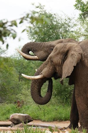 Garonga Safari Camp: Elephants in camp - Day 1