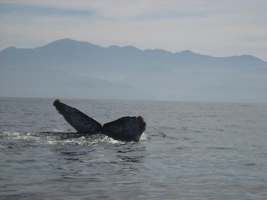 Casa de los Arcos : Whales Abound!