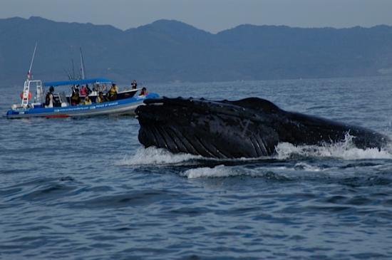 Casa de los Arcos: More Whales