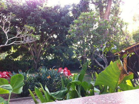Everest Inn: The garden at dining area, beautiful