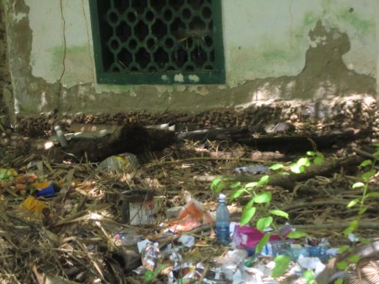 Diani Star Beds: Vue derrière la piscine