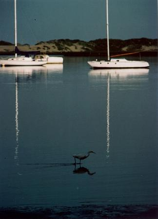 Morro Bay, Californie : From Museum Cove, State Park