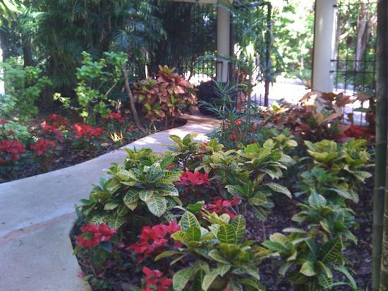 Riviera Maya Suites: Garden walkway to your suite.