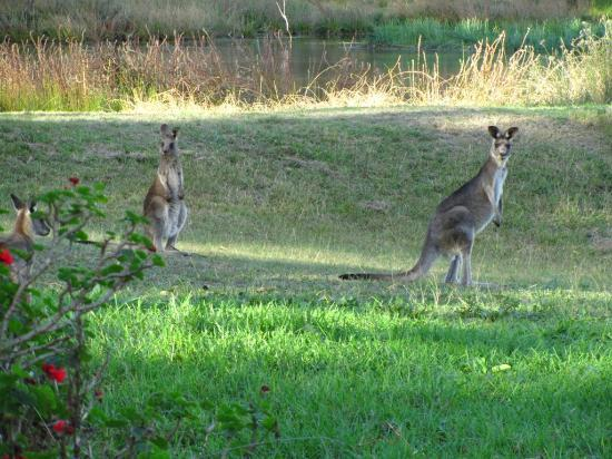 Blackwattle Luxury Retreats: Nosy neighbours
