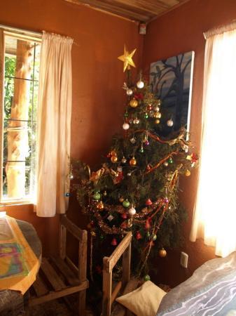 Casa Tranquilo Hostel: The Chismas tree at Casa Tranquillo