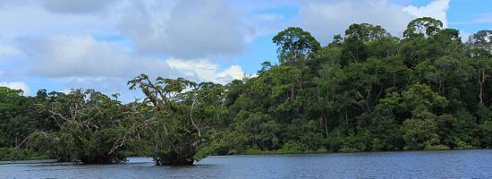 Siona Lodge: Lagune