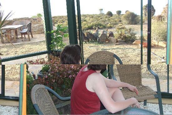 Cape Cassini Wilderness Retreat: Guest viewing kangaroos
