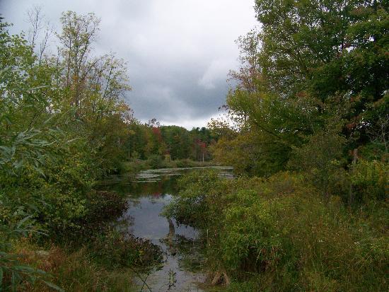 Cornell Lab of Ornithology: Large Pond
