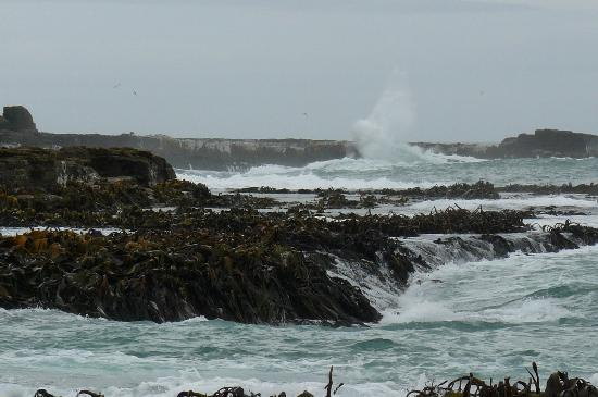 Curio Bay Camp Ground: raging sea at curio bay