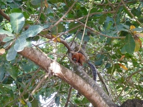 Hotel Casacolores: Squirrels!