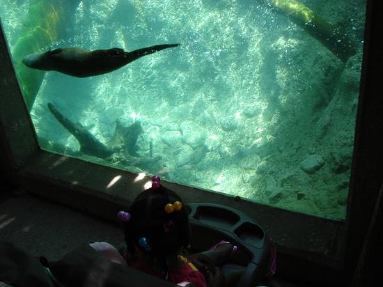 Columbus Zoo and Aquarium: the kids oughta love the otters