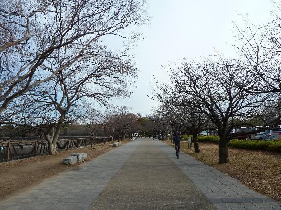 ปราสาทโอซาก้า: 大阪城外一景