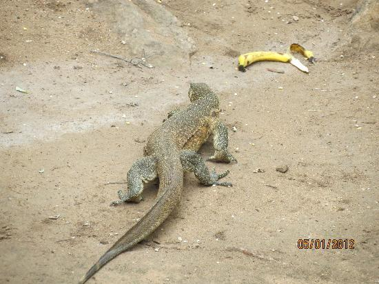 Bushwise Safaris: Pet