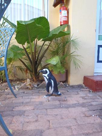 Boulders Beach Lodge: Penguin outside room