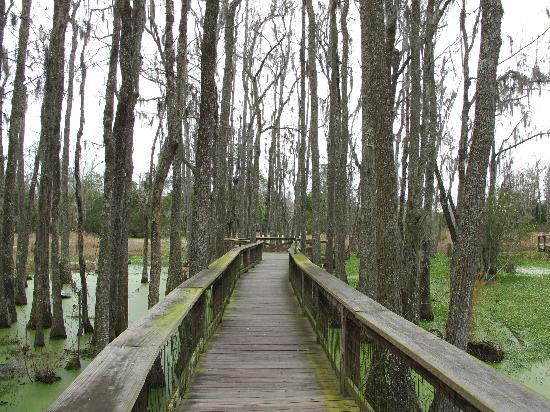 Audubon Swamp Garden: A walk through the swamp