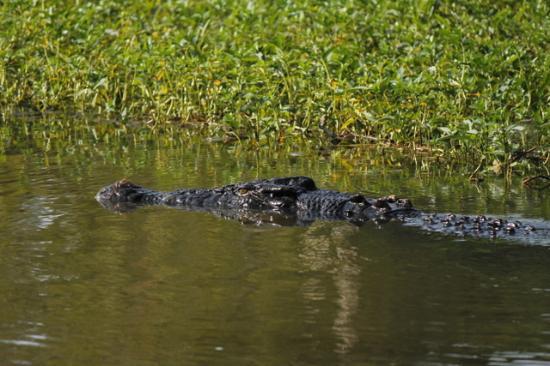 Kakadu National Park, Australien: Crocodile