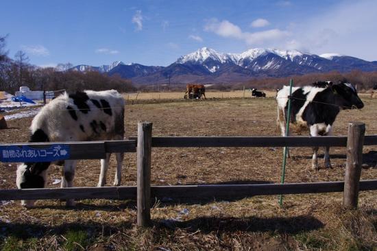 Takizawa Ranch: 牧場