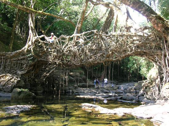 Cherrapunjee, India: Root Bridge