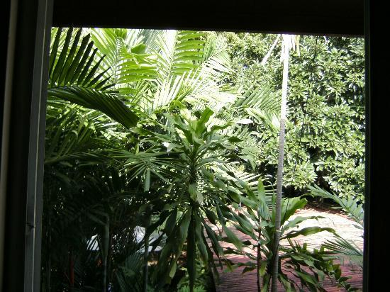 Baru Lodge: View from our room into the garden