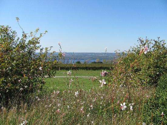 Seneca Lake Wine Trail : View of East Side of Seneca Lake