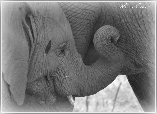 ชิดูลิ ไพรเวท เกมส์ ลอดจ์: Elephant feeding