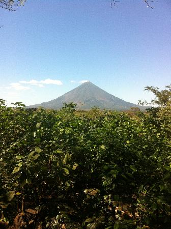 La Via Verde - Organic Farm and B&B: The view from the Private Cabin.