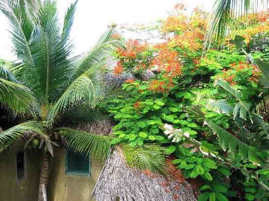 Posada Castillo Oasis: Turmzimmer ist in der Baumkrone