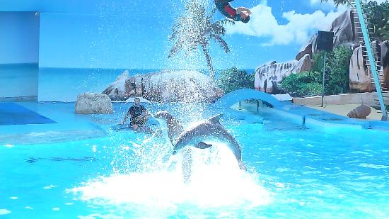 Hotel Apartamentos do Golf: Dolphin show at zoo marine