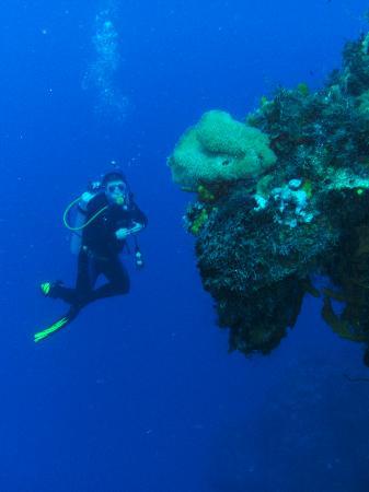 Dive Cooperative