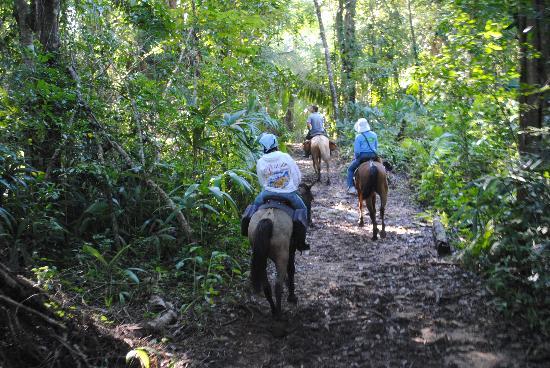 Mountain Equestrian Trails: Horseback riding thru the jungle
