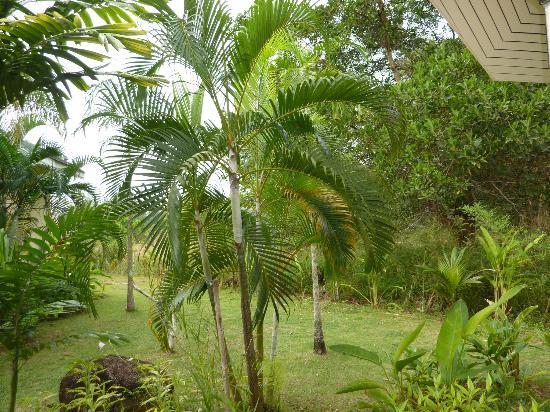 palm garden resort khao lak palm garden - Palm Garden