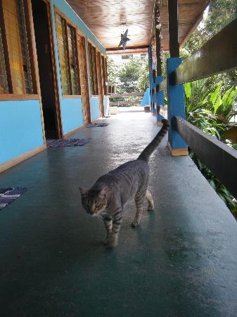 Hotel Kangaroo: Sweet kitty! Nice balcony with hammocks.