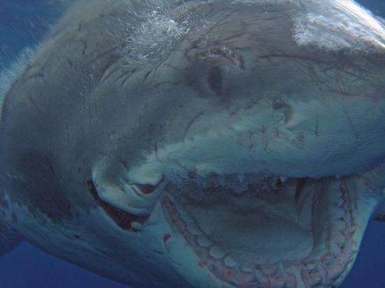 Great White Adventures: Hungry?