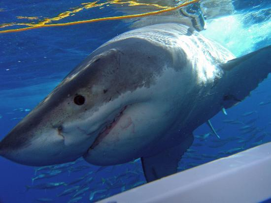 Great White Adventures: The only saving grace of the trip!