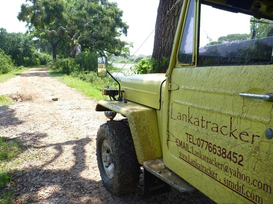 Lanka Tracker - Day Tours: Yala is really a nice place