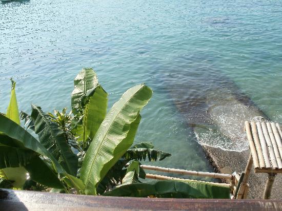Che Lagarto Hostel Ilha Grande: vista de la habitación suite a la que fui