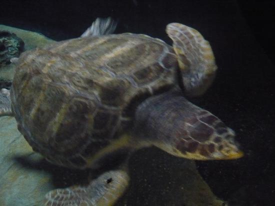Acquario tartarughe foto di lisbon oceanarium lisbona for Acquario per tartarughe piccole