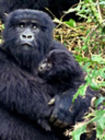 Primate Safaris: madonna and child