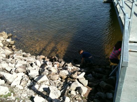 Lewis-Smith Lake & Dam : very clear water