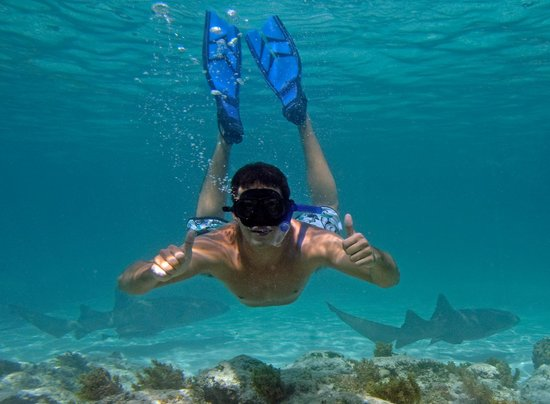 Marinarium Excursions Snorkeling Cruise