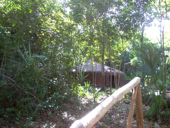 Temazcal Cenote Experience: a pathway to the past
