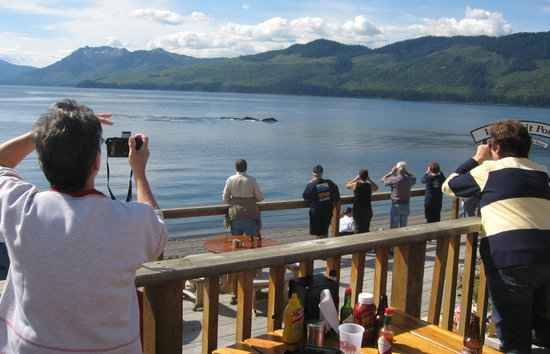 The Cookhouse - at Icy Strait Point: Whales right in front of the Cookhouse and Icy Strait Point