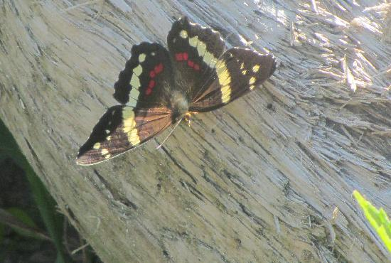 Curu National Wildlife Refuge: Butterfly at Curu