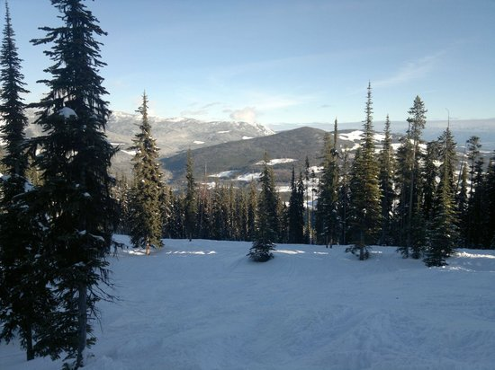 Kimberley Alpine Resort: Part of the upper black forest. Beyond this nice powder patch is the steep mogul section with gl