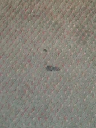 Microtel Inn & Suites by Wyndham Ft. Worth North/At Fossil Creek: Burnt carpet