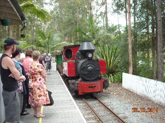 Timbertown Wauchope: The steam train.