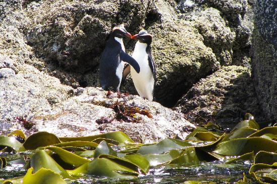 Rakiura Charters & Water Taxi : Enjoy a world class pelagic bird tour