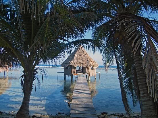 Glovers Reef Atoll, เบลีซ: hut #9