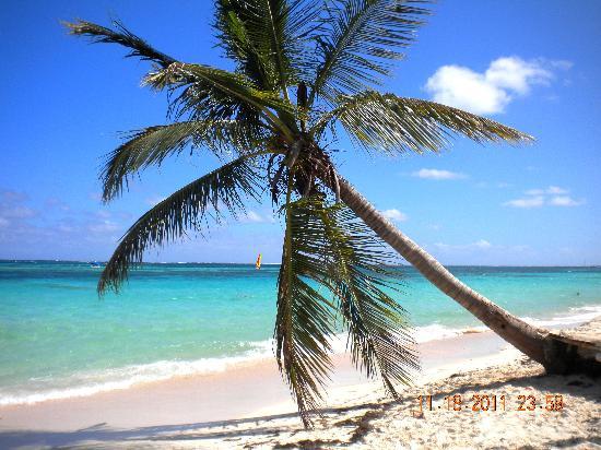 Dreams Palm Beach Punta Cana: beach off to the left