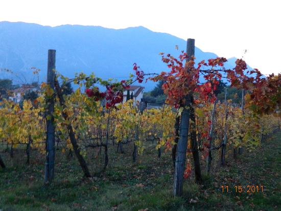 Italy Farm Stay: Gorgeous vineyard next door to farm